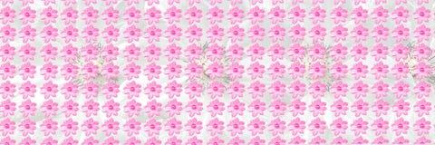 Nahtloses Muster PinkFloral blüht Beschaffenheitshintergrund Stockbilder