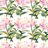 Nahtloses Muster - rosa Aquarellpfingstrosenblumen stock abbildung