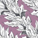Nahtloses Muster Spathiphyllum Hand gezeichnete Grafiken stock abbildung