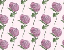 Nahtloses Muster Vektorblumenmuster mit Blüte Asclepias syriaca auf blassem - rosa Hintergrund lizenzfreie abbildung