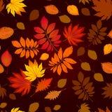 Nahtloses Muster verfasst vom bunten Herbstlaub Stockfotos