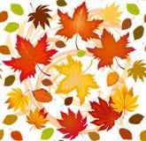 Nahtloses Muster verfasst vom bunten Herbstlaub Stockbilder