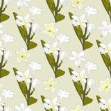 Nahtloses Muster von Blumen Plumeria Tropische Blumen lizenzfreie abbildung