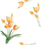 Nahtloses Muster von Frühlingstulpen mit orange Blumen auf einem weißen Hintergrund watercolor Lizenzfreie Stockbilder