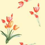 Nahtloses Muster von Frühlingstulpen mit roten Blumen auf einem hellgelben Hintergrund watercolor Lizenzfreie Stockfotos