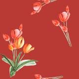 Nahtloses Muster von Frühlingstulpen mit roten Blumen auf einem tiefroten Hintergrund watercolor Lizenzfreies Stockfoto