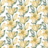 Nahtloses Muster von gelben Lilien Lizenzfreie Stockbilder