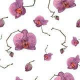 Nahtloses Muster von Hand gezeichneten purpurroten Orchideen des Aquarells auf dem weißen Hintergrund lizenzfreie abbildung