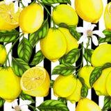 Nahtloses Muster von Handgezogenen Zitronen lizenzfreie abbildung