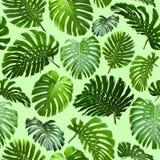 Nahtloses Muster von tropischen Blättern Stockbild