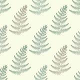 Nahtloses Muster Zentangle-Vektorgrün Farns Dekoratives Stammes- Stockfotografie