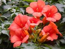 Nahtloses Rosenmuster mit Spitzegrünhintergrund lizenzfreies stockfoto
