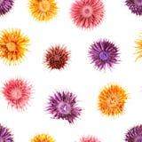 Nahtloses Trockenblumemuster Stockbilder