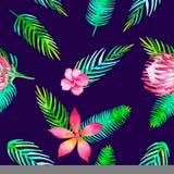 Nahtloses tropisches Muster des Sommerstrandes mit romantischen mit Blumenelementen des Dschungels - Protea und gibiscus Endlose  Lizenzfreie Stockfotos
