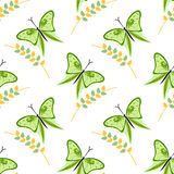 Nahtloses Vektormuster mit Insekten, bunter Hintergrund mit grünen Schmetterlingen und Niederlassungen mit Blättern OM der weiße  Stockfotografie