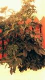 Nahtloses Weinlese-Tapeten-Muster Lizenzfreies Stockbild