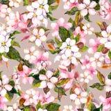 Nahtloses wiederholtes Blumenmuster - rosa Kirsche Kirschblüte und Apfelblumen watercolor Lizenzfreie Stockbilder