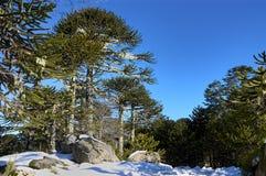Nahuelbuta, parque nacional de Chile Imágenes de archivo libres de regalías