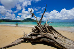 Nai Yang Beach blue cloundy sky with old tree on the beach Phuket,Thailand, Royalty Free Stock Images