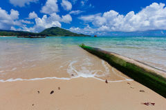 Nai Yang Beach blue cloundy sky with old tree on the beach Phuket,Thailand, Stock Image