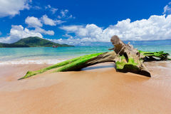 Nai Yang Beach blue cloundy sky with old tree on the beach Phuket,Thailand, Stock Photo
