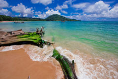 Nai Yang Beach blue cloundy sky with old tree on the beach Phuket,Thailand, Stock Images
