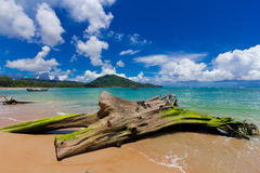 Nai Yang Beach blue cloundy sky with old tree on the beach Phuket,Thailand, Stock Photos
