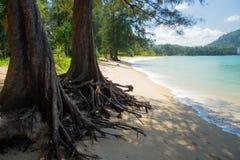NAI YANG Beach i den Phuket ön, Thailand-4 royaltyfri bild