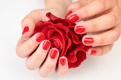 Nail art concept. Beautiful female hands with neat manicure holding. Red rose royalty free stock photo