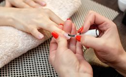 Nail artist paints nails with nail polish during the procedure of nail extensions with gel in the beauty salon. Professional care for hands stock images