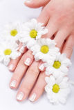Nail care and daisies Stock Images