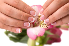 Nail care for women's hands Stock Image