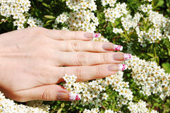 Nail Design. Manicure on Long Real Nails stock photo