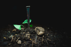 Nail in the dirt Royalty Free Stock Images