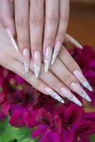 Nail extension. Female hands on the grass - nail extension royalty free stock images