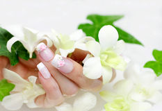 Nail and orchid Stock Image