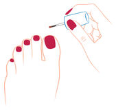 Nail polish. The picture shows the nail polish Stock Images