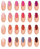 Nail polish collection. Nail polish in different fashion colors. Nail care set. Manicured finger isolated Stock Image