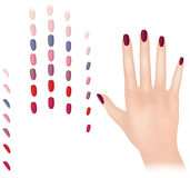 Nail polish collection with female hand. Editable Royalty Free Stock Image