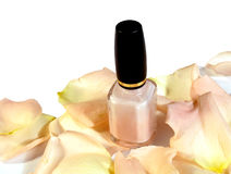 Nail polish on petals. Pale peach/pink colored nail polish on rose petals on white background royalty free stock images