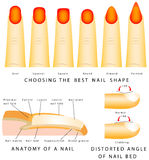 Nail shape Stock Photo
