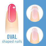 Nail shape oval. Nail manicure. How to make oval nail shape. Vector Royalty Free Stock Photo