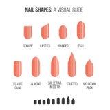 Nail shapes. Visual guide. Royalty Free Stock Image