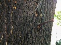 Nail in the tree stock photo
