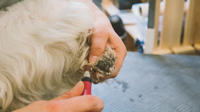 Nail trimming in dogs. Service grooming salon for dogs. Nail care dogs. Shallow focus Royalty Free Stock Photos