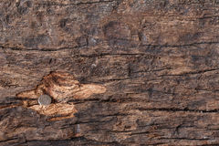 Nail in wood. Little nail is hammered deep in the wood Royalty Free Stock Photos