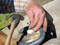 Nailing Down the Horseshoe. Blacksmith, or equine farrier, nails a horse shoe to a horse's hoof Royalty Free Stock Photos