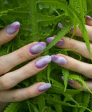Nails. Manicure, designed purple nails over green fern Stock Photography