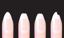 Nails. Stock Photo