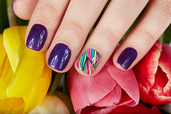 Nails with beautiful manicure and tulip flowers Royalty Free Stock Images